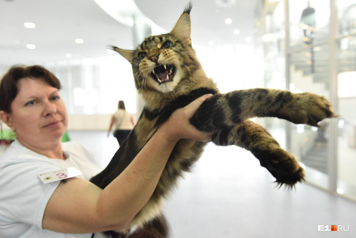 Выставка кошек — традиционный хит программы Дня города. Смотрите наш  мяу-репортаж