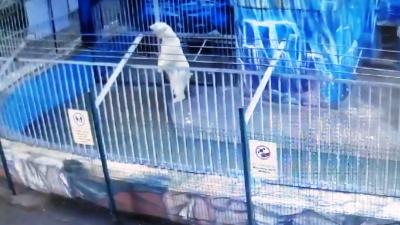 Боялись и вставали на задние лапы: как белые медведи пережили ураган в Пермском зоопарке. Видео