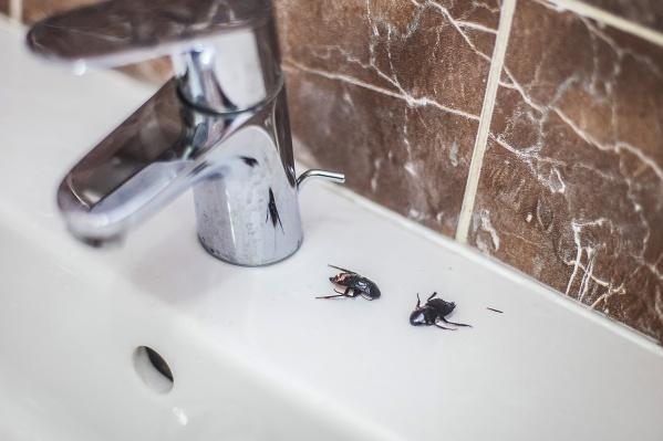 На борьбу с насекомыми и грызунами заказчик планирует направить не больше708,2 тысяч рублей