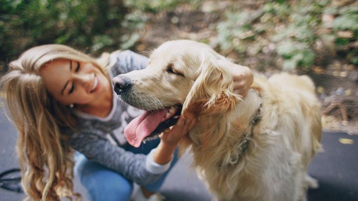 Дай лапу: где гулять с собаками