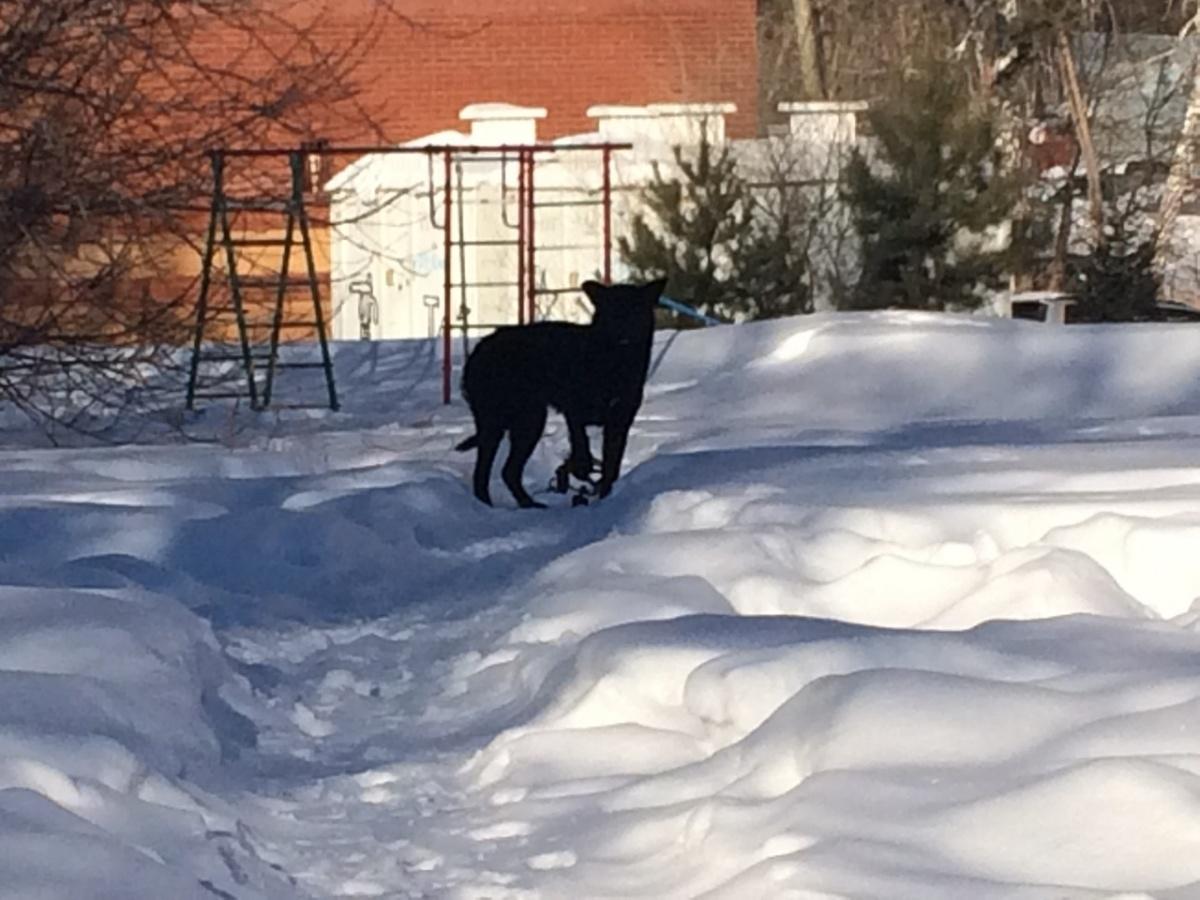 Собаки попадают в капканы в Академгородке и микрорайоне Шлюз