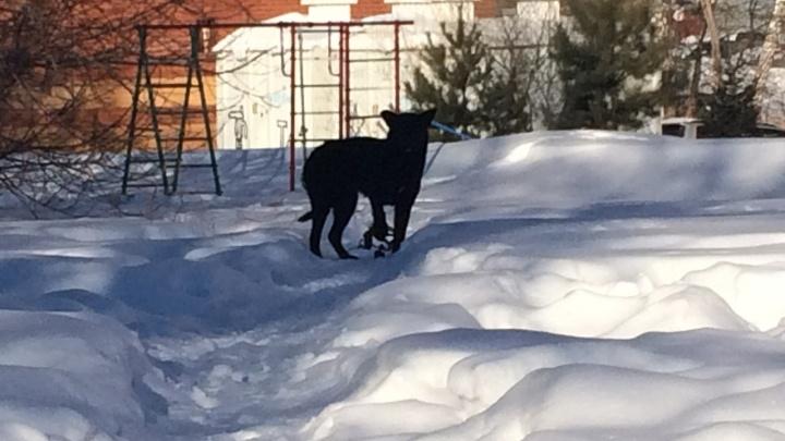 «Очередная жертва в капкане»: на Шлюзе заметили собаку, попавшую в ловушку
