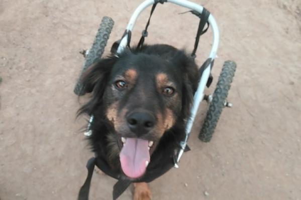 Макс не может ходить — но совершенно по этому поводу не расстраивается