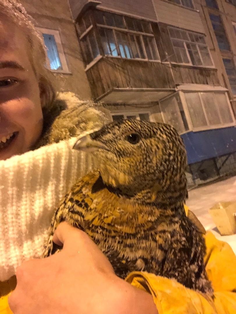 Птица приручена к рукам и агрессии не проявляет