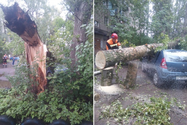 Дерево во дворе надломилось и упало на припаркованный «Рено»