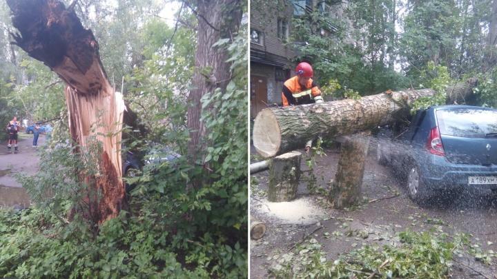 До сих пор спасают машины: в Ярославле во время грозы деревья валились на балконы и парковки