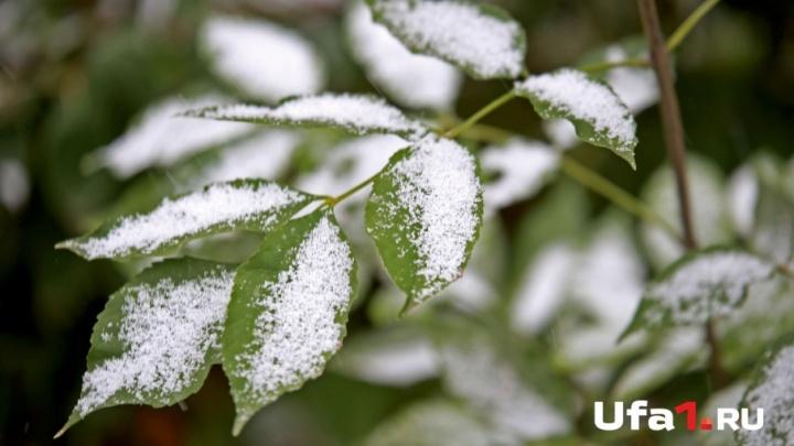 Одеваемся: на выходных в Башкирии будет снежно