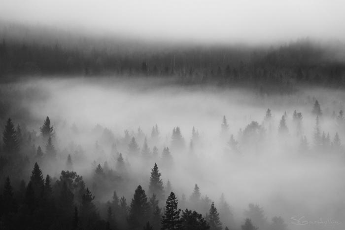 Лес, сфотографированный на Усьвинских столбах в Пермском крае