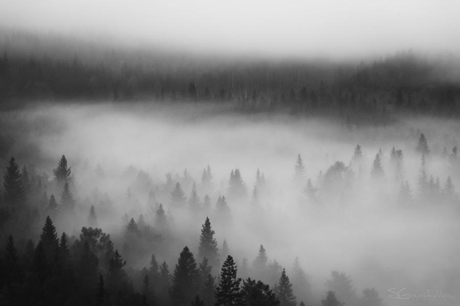 Картинка серый туман