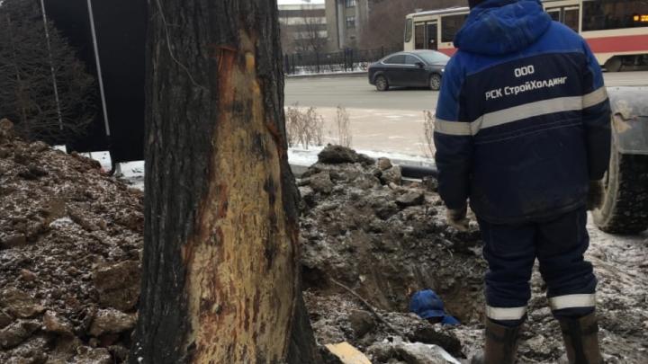 Строители сквера за Оперным выплатили 2,8 миллиона за то, что повредили стволы 12 деревьев
