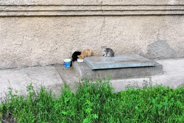 По словам замдиректора УК, из-за кошек в подвале живут блохи, которые кусают слесарей