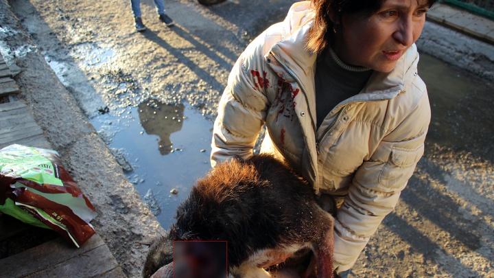Омское «Спецавтохозяйство» уже неделю не ловит собак