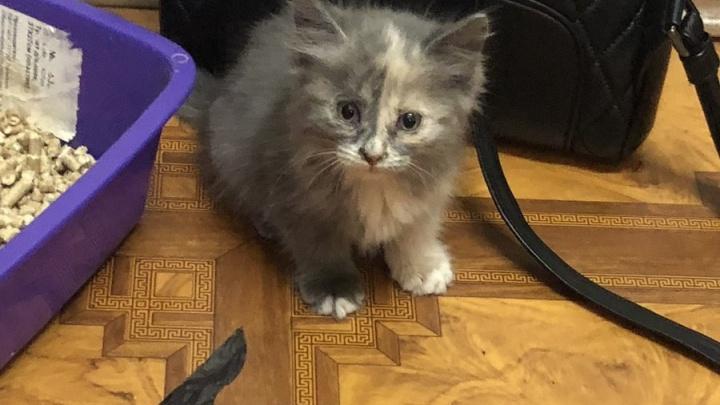 В Самаре котёнка спасли из вентиляции, назвали Феликсом и взяли в семью