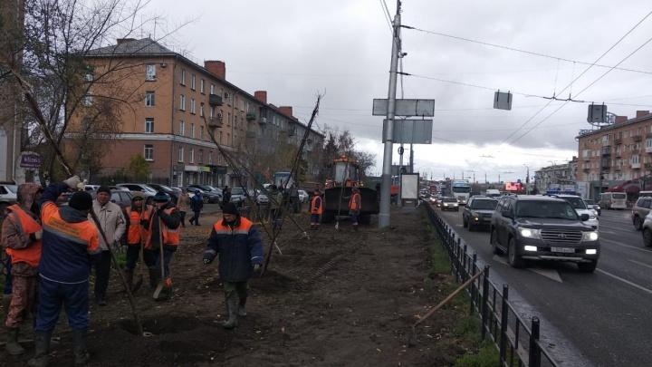 На Ленинградской площади вместо срубленных берёз посадили 40 лип и 100 кустарников