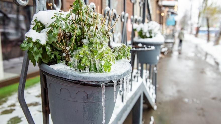 Мокрый снег и ледяные улицы: погода в Ярославле испортится через несколько часов