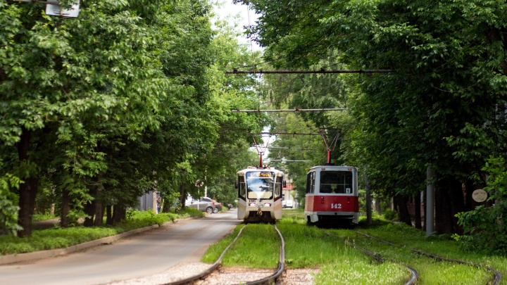 Из-за упавшего на пути дерева в Ярославле изменили маршруты трамваев