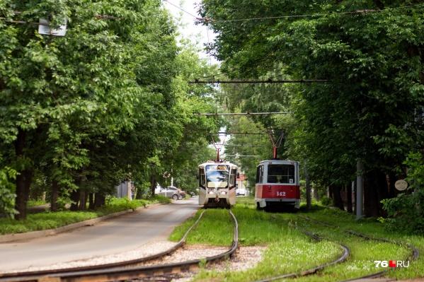 Упавшее на пути дерево повлияло на работу трамваев 1-го и 7-го маршрутов
