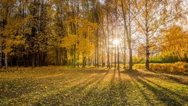 Ярославль волшебный. Семь парков, в которых ещё можно успеть погулять в золотую осень