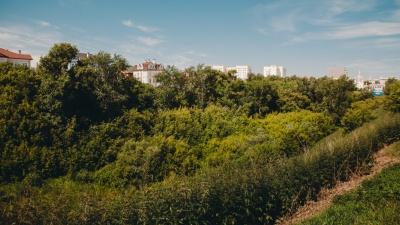 «Если дерево снесут — взамен ничего не посадят». Экоактивист — о «лысеющей» Тюмени