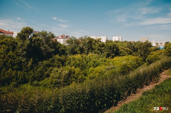 Такой ландшафт остался, пожалуй, только в логу реки Тюменки