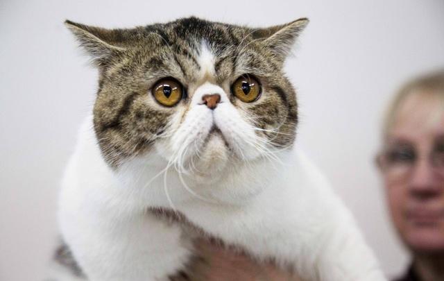 В Черниковке живодеры выкололи кошкам глаза