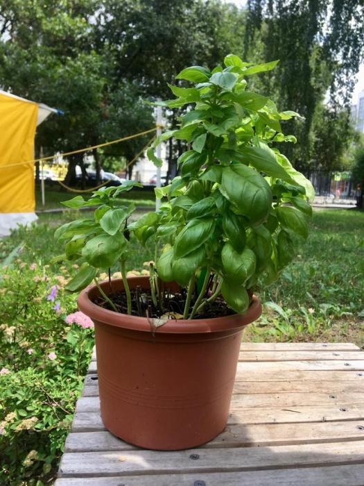 Третий член команды — растение, которое ездит по свету с артистами
