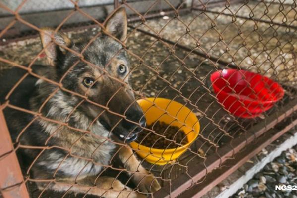 В прошлом году в Красноярске отловили 1300 животных