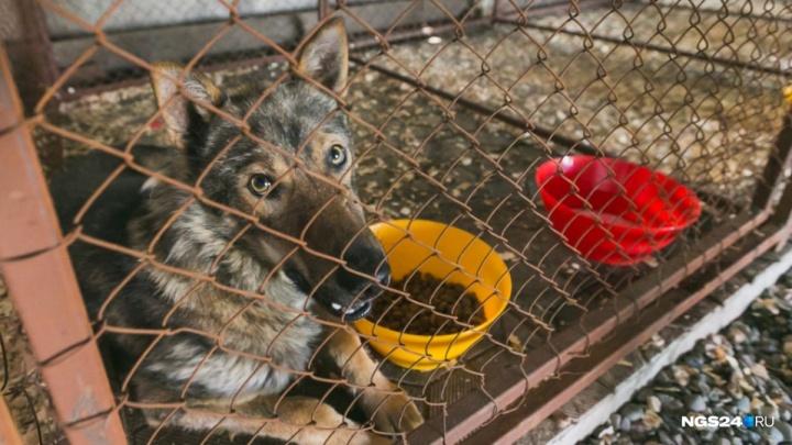 Бродячих псов на время Универсиады предложено заселить в приюты за 70 рублей в день