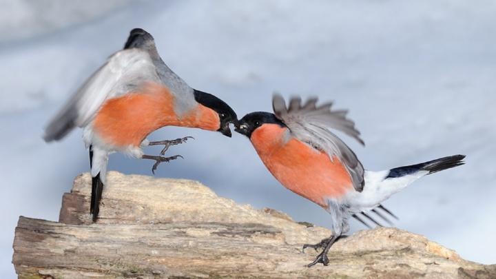 Птицы устроили погром в торговом центре