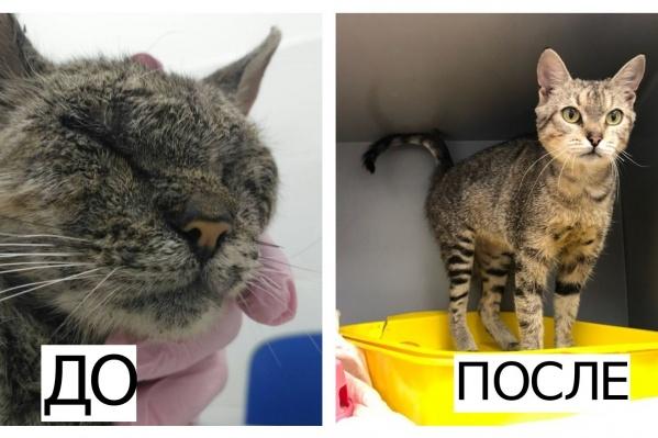 У каждого уличного кота с запущенным недугом есть шанс стать здоровым домашним любимцем