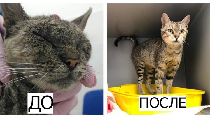 До и после: 14 фото бездомных животных, которые попали в добрые руки