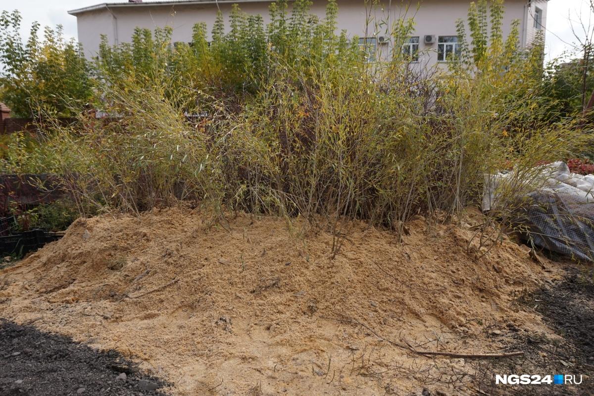 Нанабережной появится ландшафтный парк ссибирскими растениями