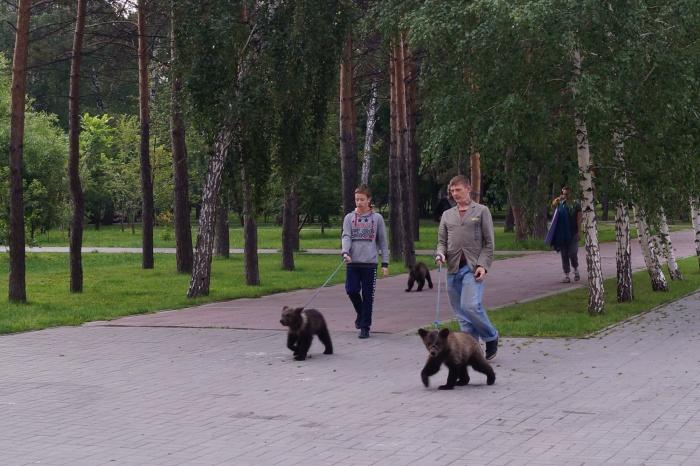 Медвежата в Нарымском сквере утром 21 июля