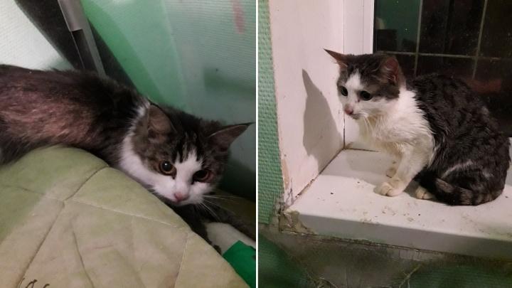 «Скелеты, обтянутые кожей»: в Архангельске волонтеры спасли 7 кошек из заваленной мусором квартиры