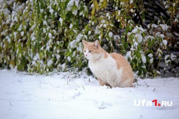 Зима пришла ещё в октябре