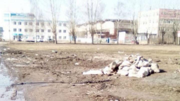 В Брагино рядом с жилыми домами раскидали отрубленные копыта