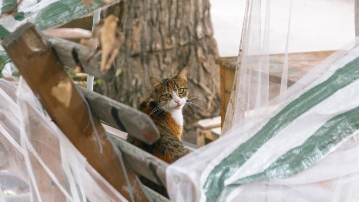 В Самарской области еще несколько животных умерли от бешенства