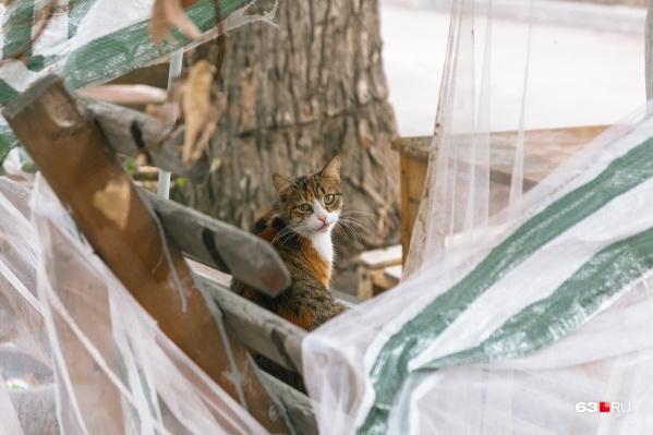 В Похвистневском районе от бешенства умерла кошка
