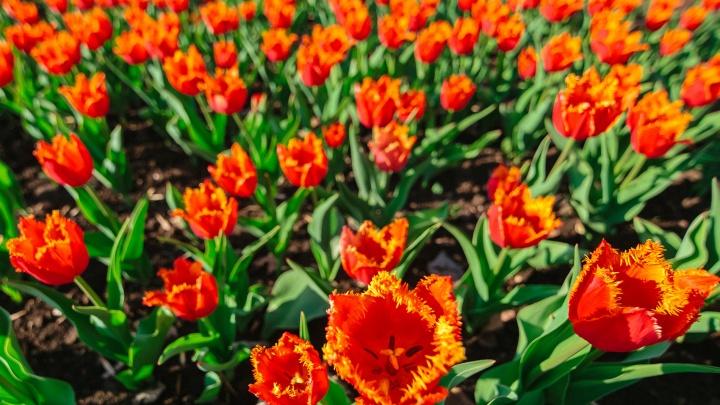 Как в Италии: в Самаре разобьют тактильный сад