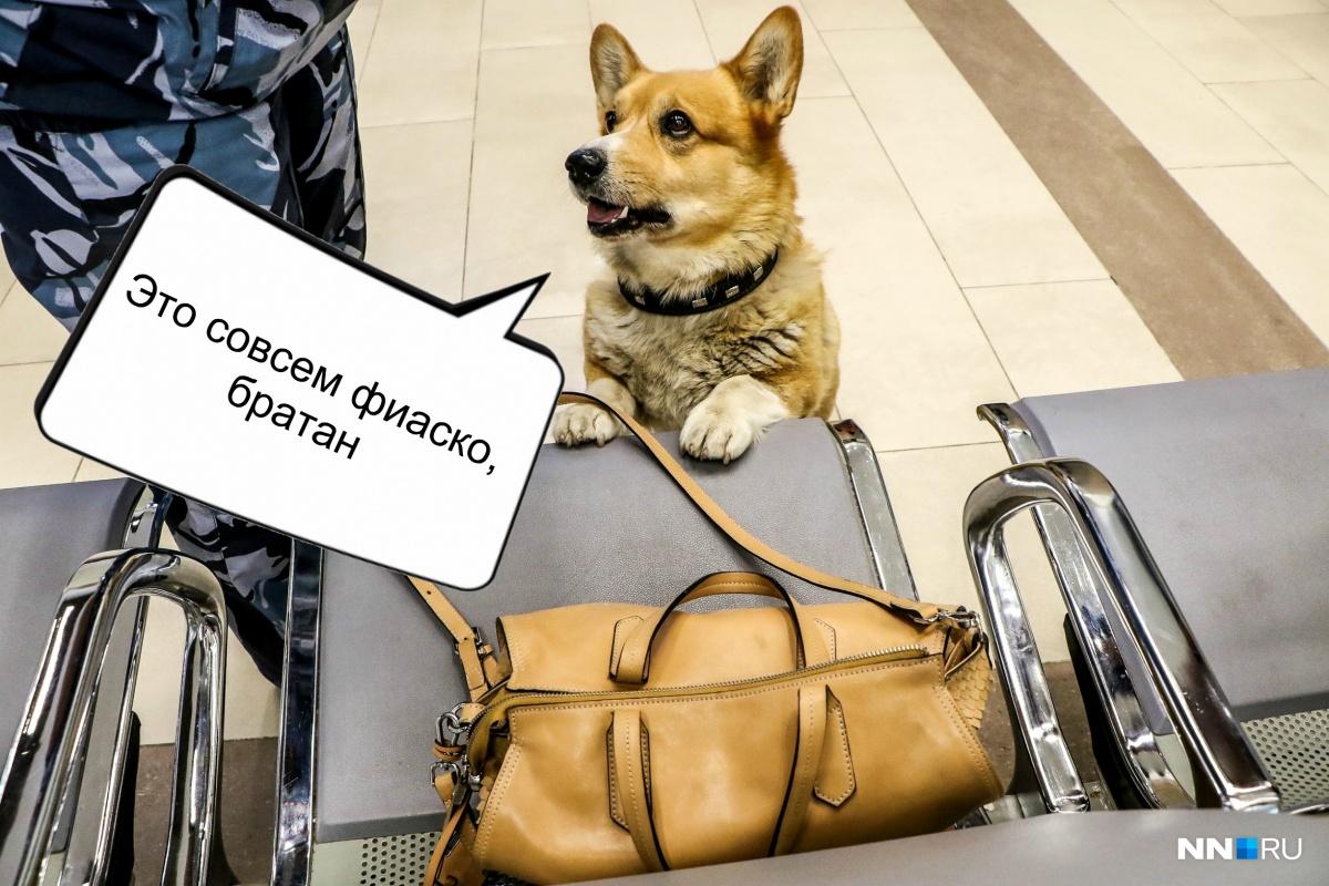 Рыжий активно патрулирует Московский вокзал