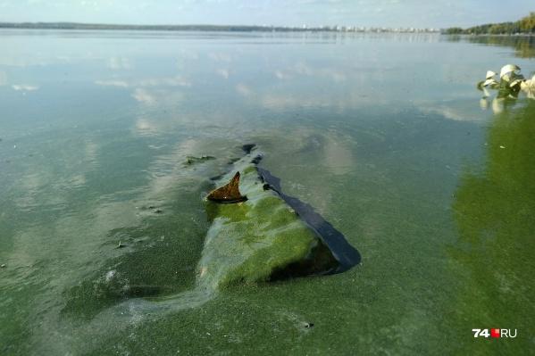 Отдыхающие горожане присылают фото зеленой воды на Шершнях