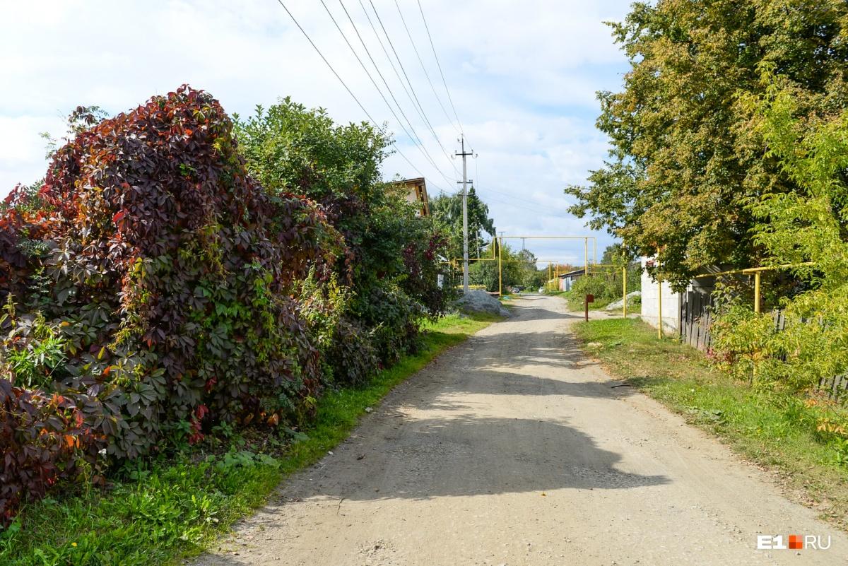 Красивые живые изгороди на Чуцкаева соседствуют с поваленными заборами
