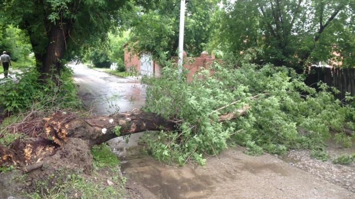Гроза повалила старое дерево на дорогу в Калининском районе