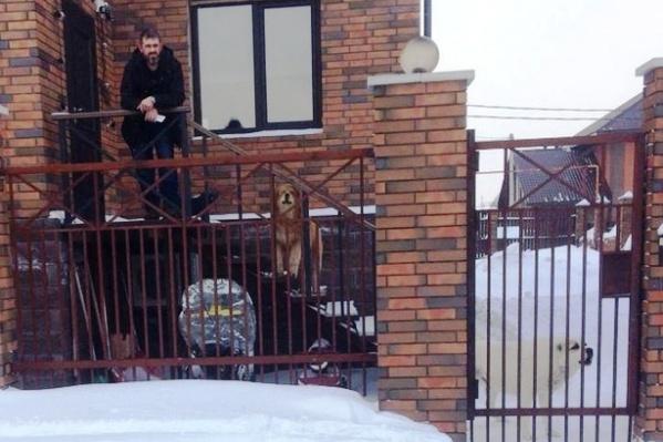 Жители посёлка составляют коллективную жалобу на хозяина опасных собак