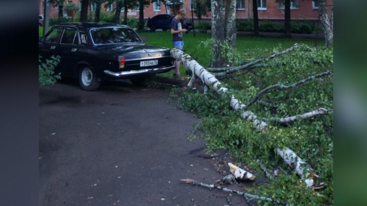 Деревья валились на дома и автомобили: последствия ливня в Ярославле: фото