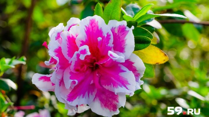 Постричь сирень и посадить пионы. Ботанический сад ПГНИУ ищет добровольцев