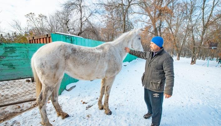 Ростовчанин обнаружил на левом берегу Дона лошадь и требует зоозащитников ее забрать