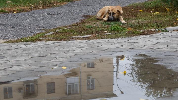 Все уйдут, а дождь останется: на выходных Волгоградская область согреется до +30 градусов