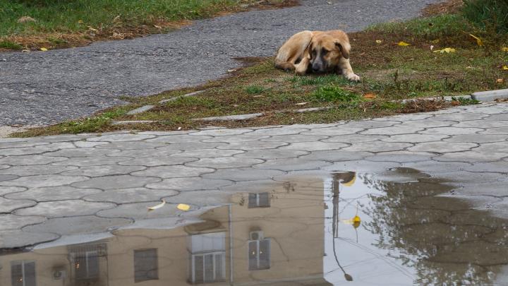 Ноябрь придёт в Волгоград с дождями и похолоданием
