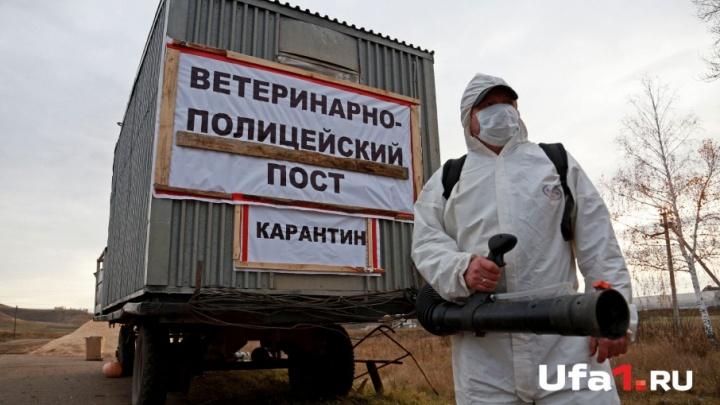 Ущерб от ящура в Башкирии оценили в 60 миллионов рублей